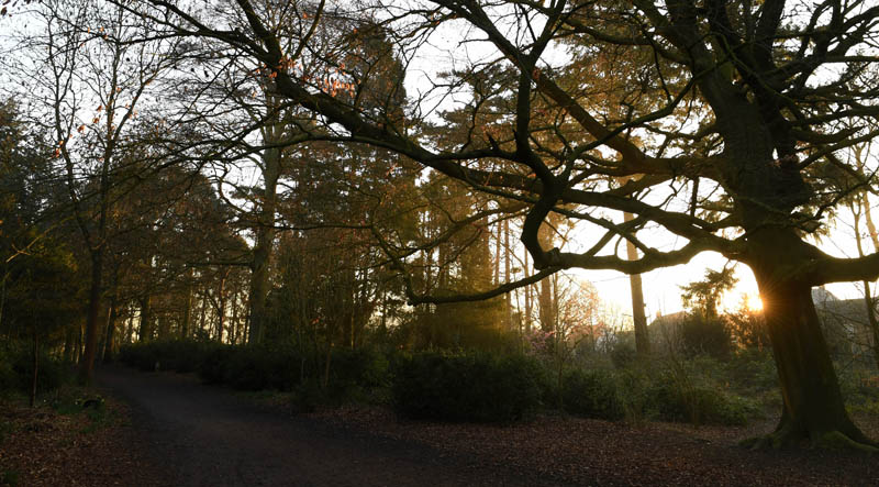 Picture at dusk of Apley Woods