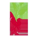 Report giant hogweed / japanese knotweed